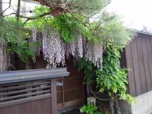 Wisteria frames an entrance